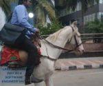 bengaluru-software-engineer-horse