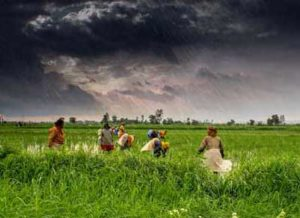 Agriculture_and_rural_farms_of_India