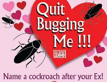 zoo-cockroach-valentine